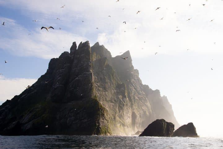 Northern gannets seen on top of the steep cliffs of St Kilda