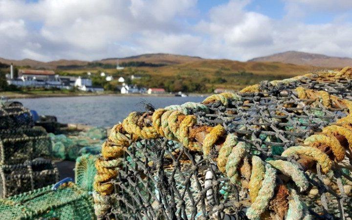 Hummerkrbe - Reusen - Schottland
